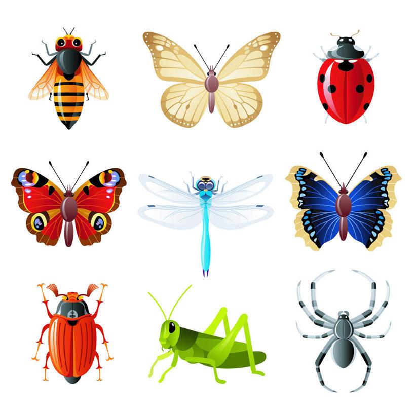 写实版昆虫手绘