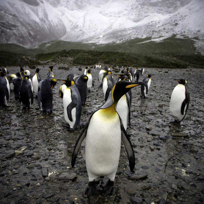 可爱企鹅胡简笔画