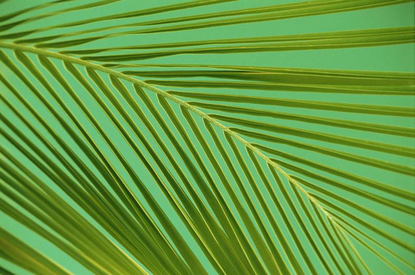 无人,横图,室内,特写,白天,正面,植物,棕榈树,叶子,阴影,新鲜,反射,纹图片