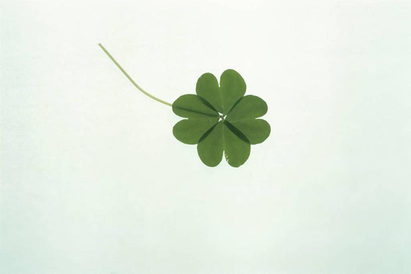 绿叶,四叶草,幸运草,嫩叶,摄影,影棚,和平,牛角花,统一,团结,幸运,叶图片