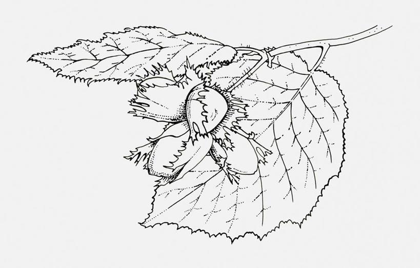 无人,横图,黑白,插画,室内,白天,白色背景,正面,数码,科技,植物,叶子
