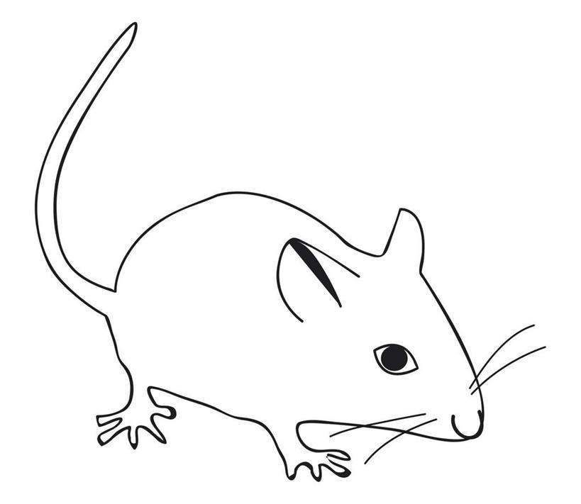 横图,俯视,黑白,插画,室内,特写,白天,白色背景,数码,科技,野生动物