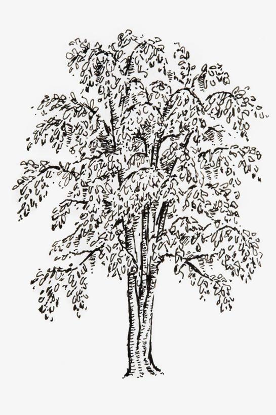 竖图,黑白,插画,室内,白天,白色背景,正面,数码,科技,植物,银杏树