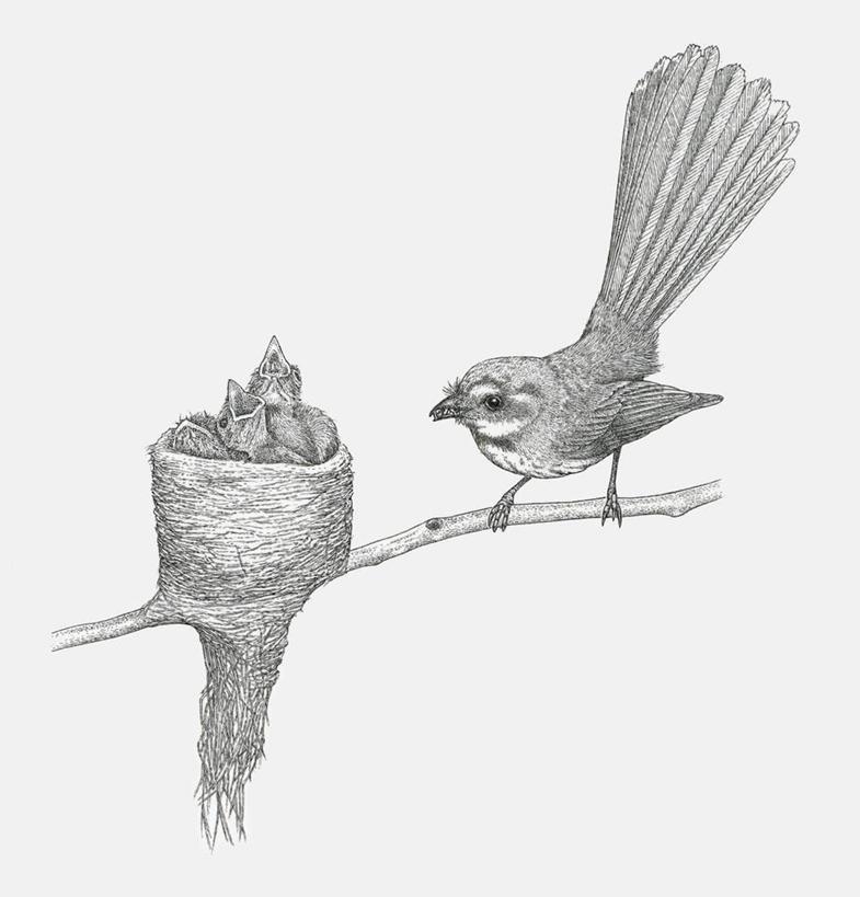 鸟巢,高光,几何,计算机图形,合成,图画,画,树枝,一个,动物,站着,可爱