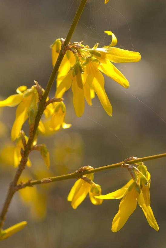 春天,景色,摄影,灌木,五颜六色,色彩斑斓,自然风光,五彩缤纷,落叶树图片