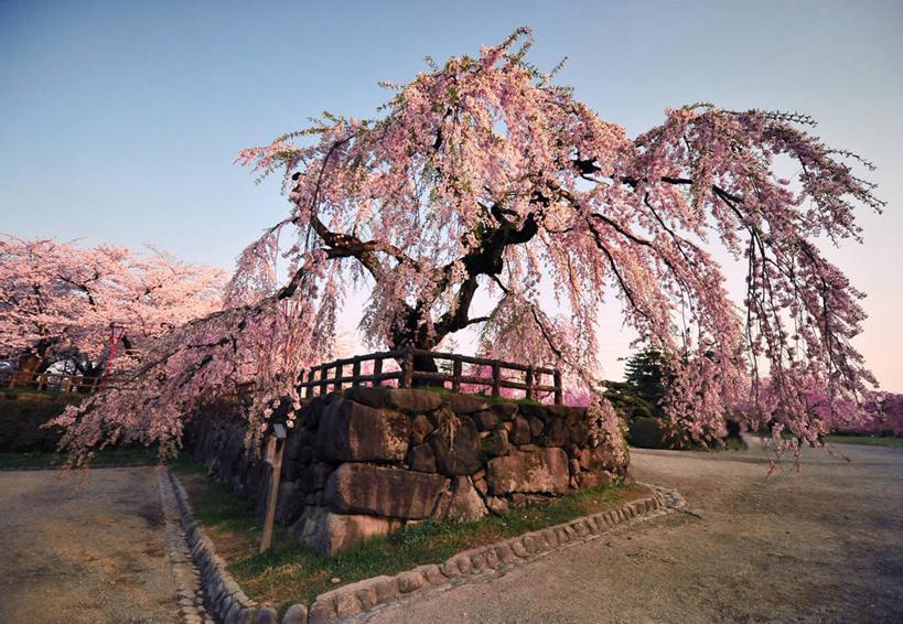 地形,景观,树,自然,景色,摄影,生长,宁静,自然风光,东亚,本州,万里无