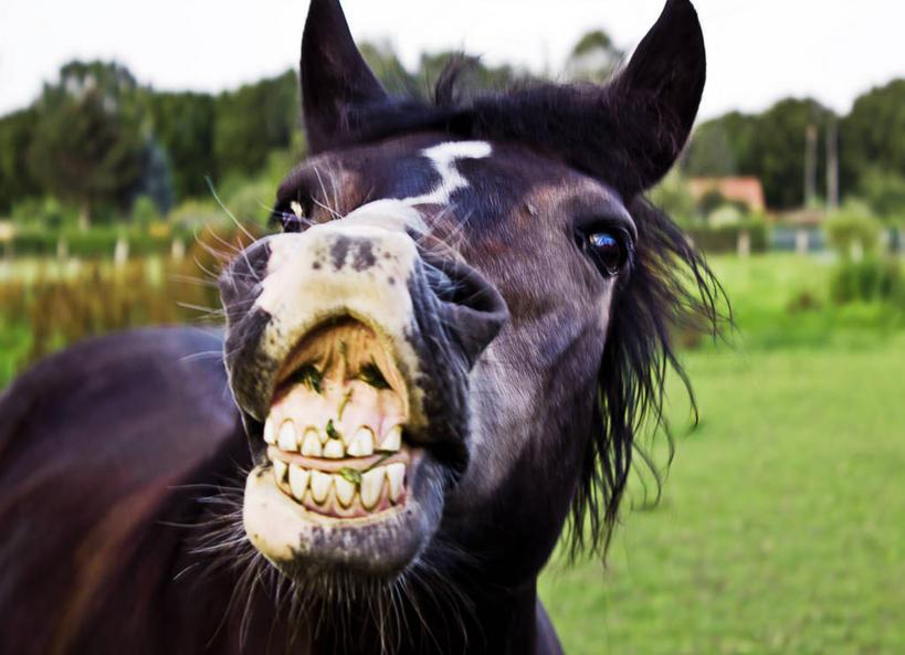 特写,白天,马,野生动物,德国,生气,草,张嘴,摄影,幽默,部分,张大嘴巴