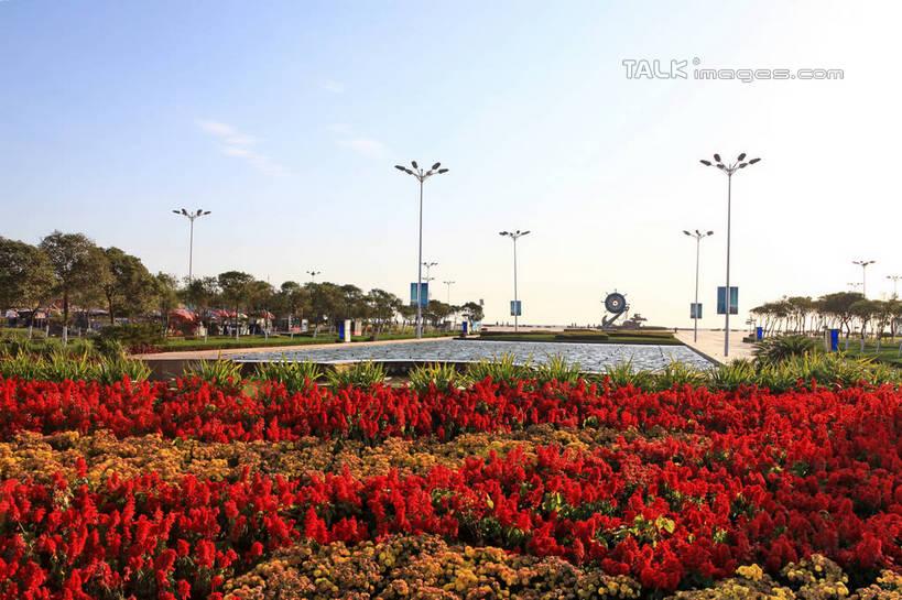 花朵,花卉,鲜花,树,树木,红色,蓝色,绿色,蓝天,天空,阳光,自然,花丛