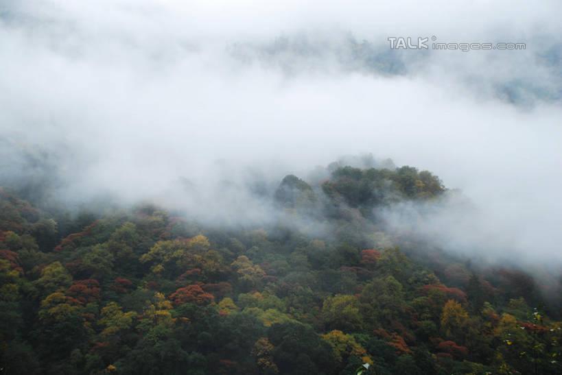 无人,横图,俯视,室外,白天,旅游,度假,美景,森林,树林,植物,雾,中国