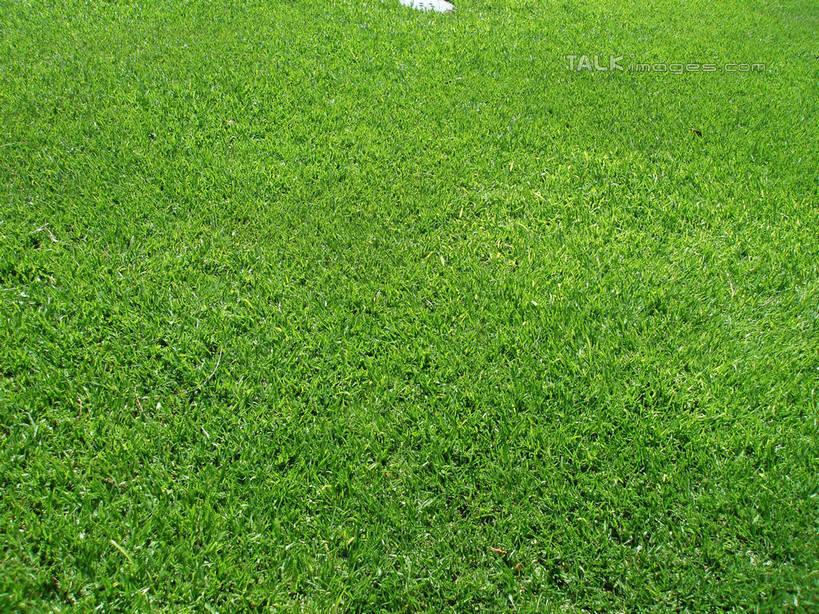 无人,横图,俯视,室外,特写,白天,草地,草坪,美景,植物,三亚,中国,亚洲