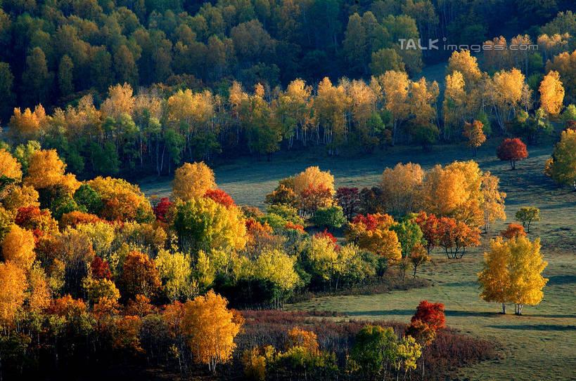 无人,横图,俯视,室外,白天,旅游,度假,草地,草坪,美景,秋季,树林,植物