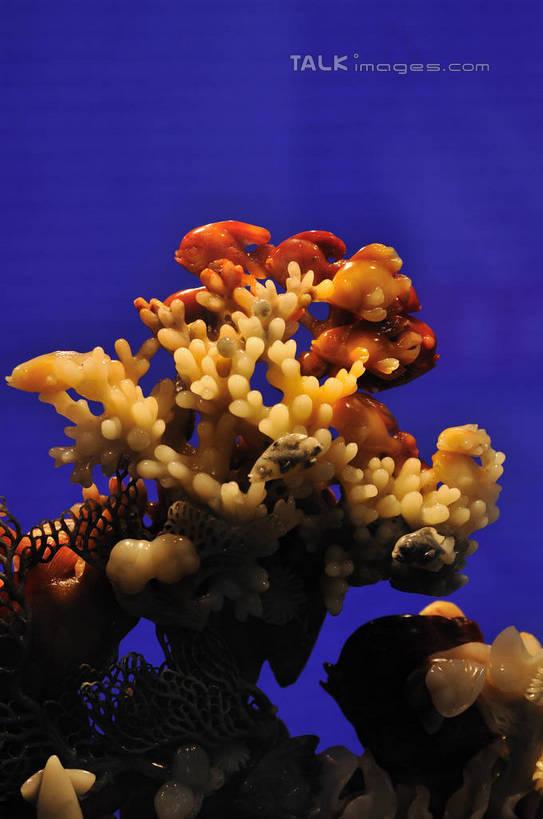 石子,影子,灯光,珊瑚礁,鱼类,石雕,海洋生物,工艺品,海藻,纪念,海草